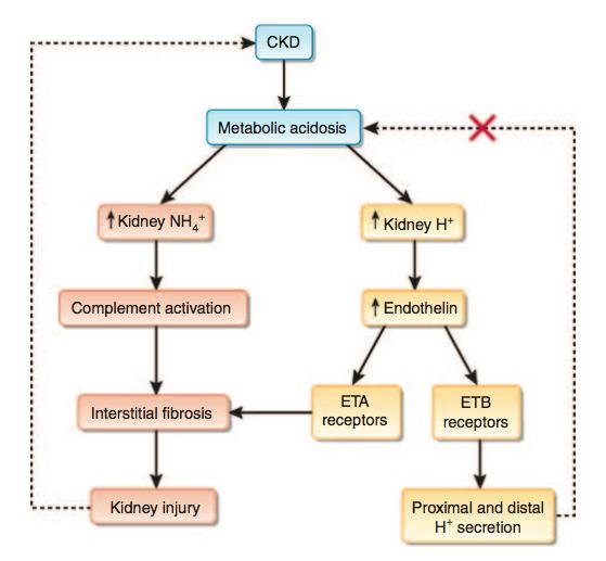 Acidose; acidoses