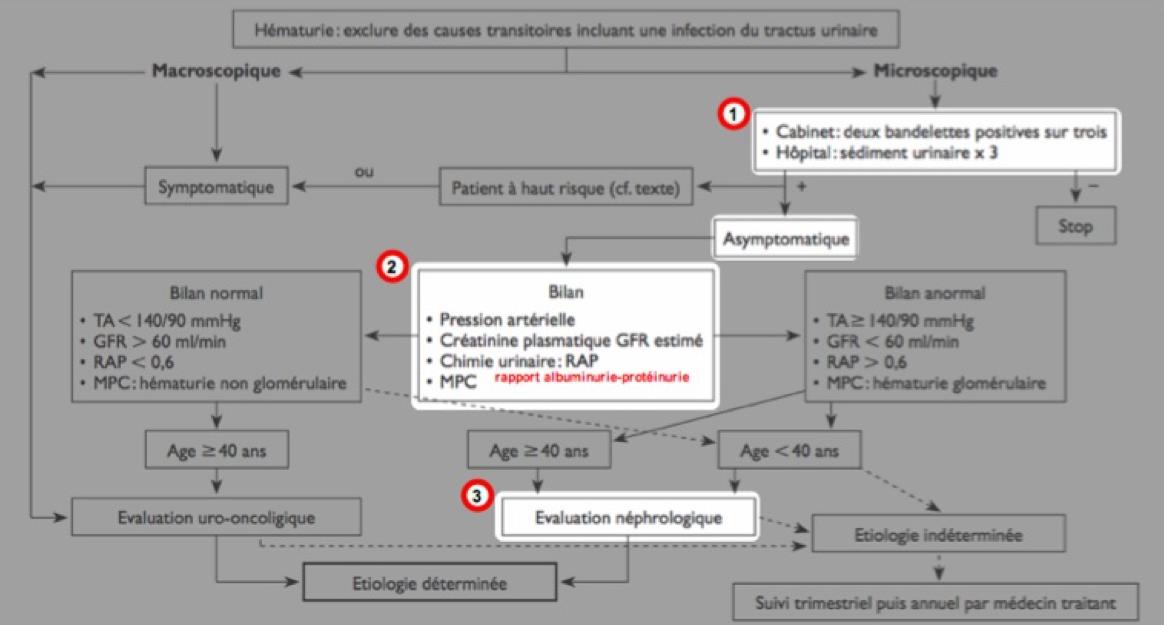 Algorithme de prise en charge de l'hématurie – Nephro.blog