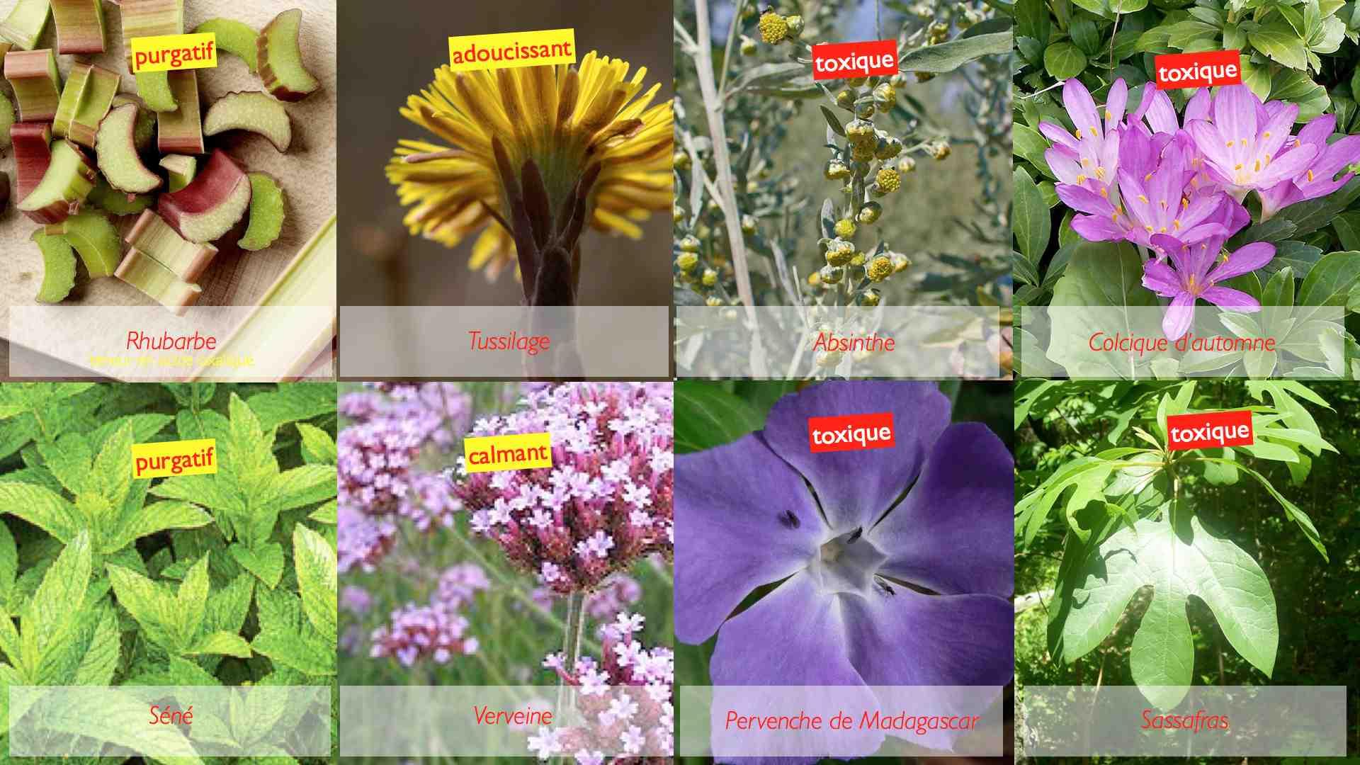 Suppl ments base de plantes et rein nephroblog for Les plantes et le gel