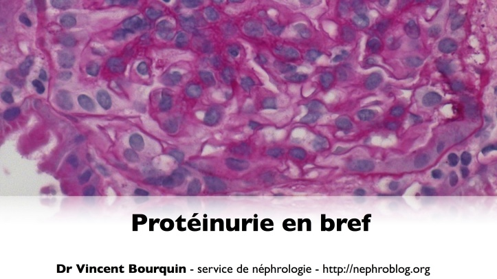 Protéinurie en bref